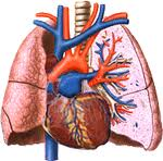 Patterns of Lung Repair (5)